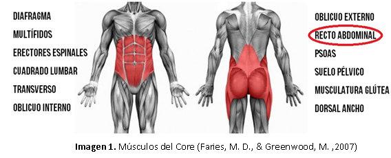 core abdominal músculos