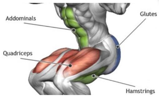piernas musculos sentadillas