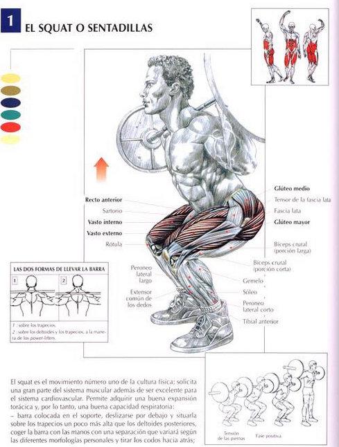 sentadillas-guia-de-musculacion